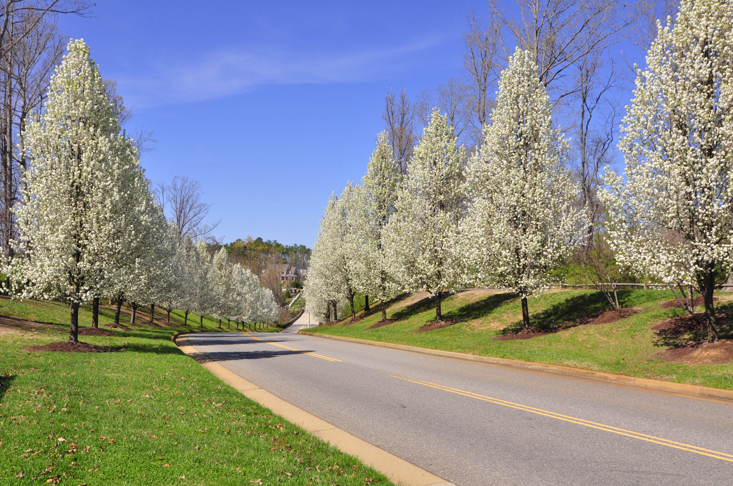 Homes for Sale in Stonehouse Neighborhood  in Williamsburg VA